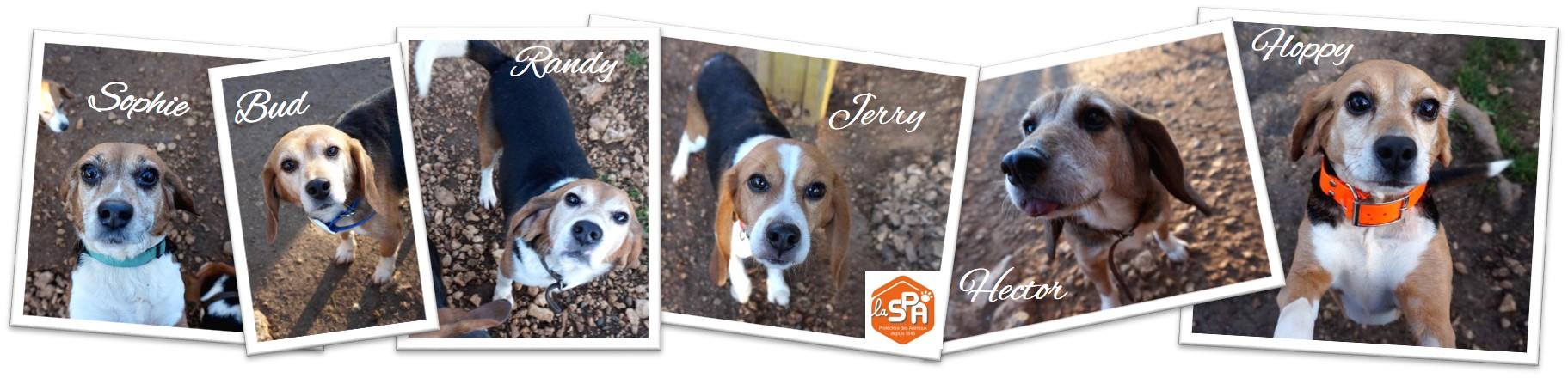 Spa D Aix En Provence Nos Beagles A Adopter Blog Du Graal