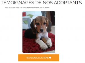 Témoignages adoptants chiens issus de laboratoires