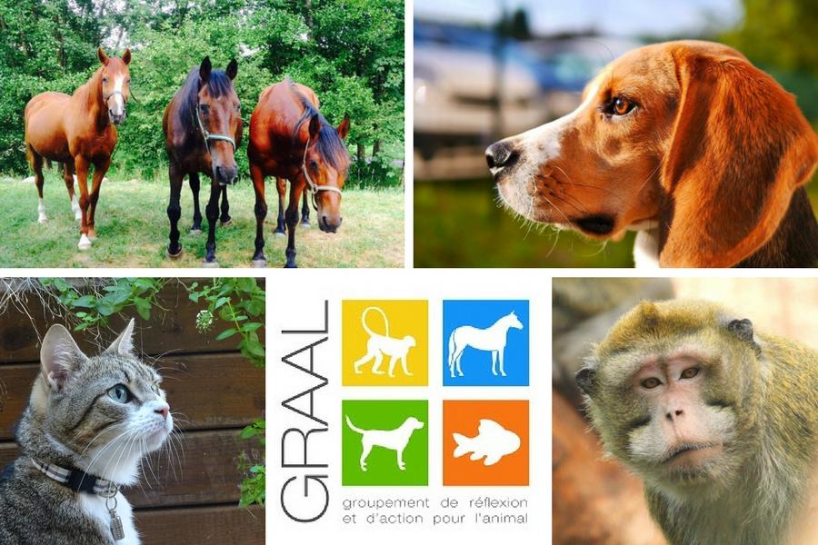 Animaux laboratoire adoptés GRAAL