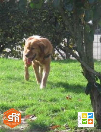 Echalotte, chien à adopter