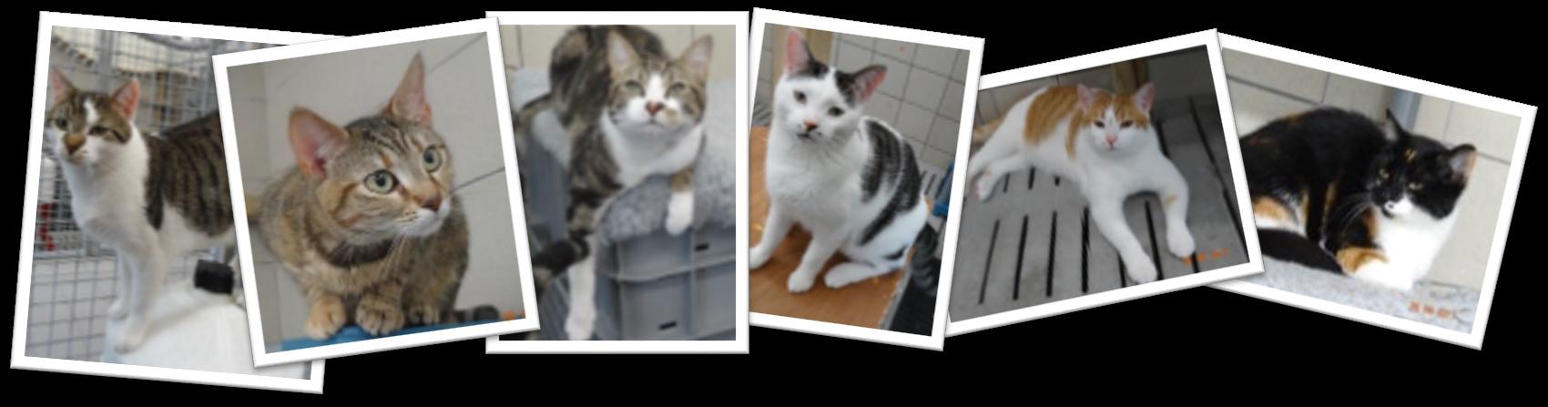 Chats à adopter Carquefou