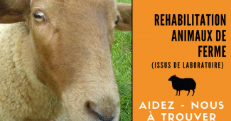 Réhabilitation animaux de ferme