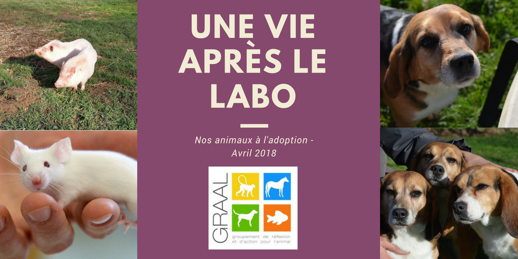 Animaux à adopter_avril 2018