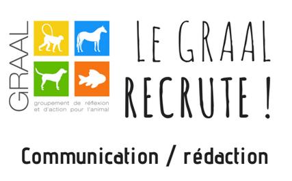 Recrutement GRAAL communication animaux de laboratoire