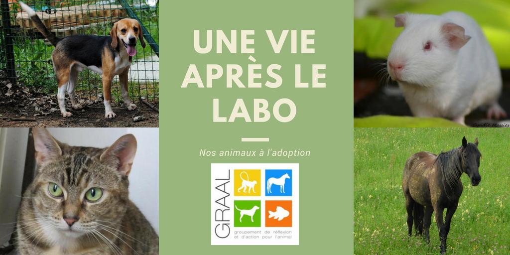 Animaux de laboratoire à adopter - Juin 2018