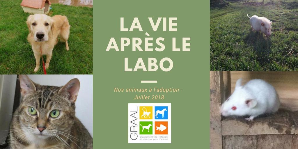 Animaux de laboratoire à adopter_juillet2018