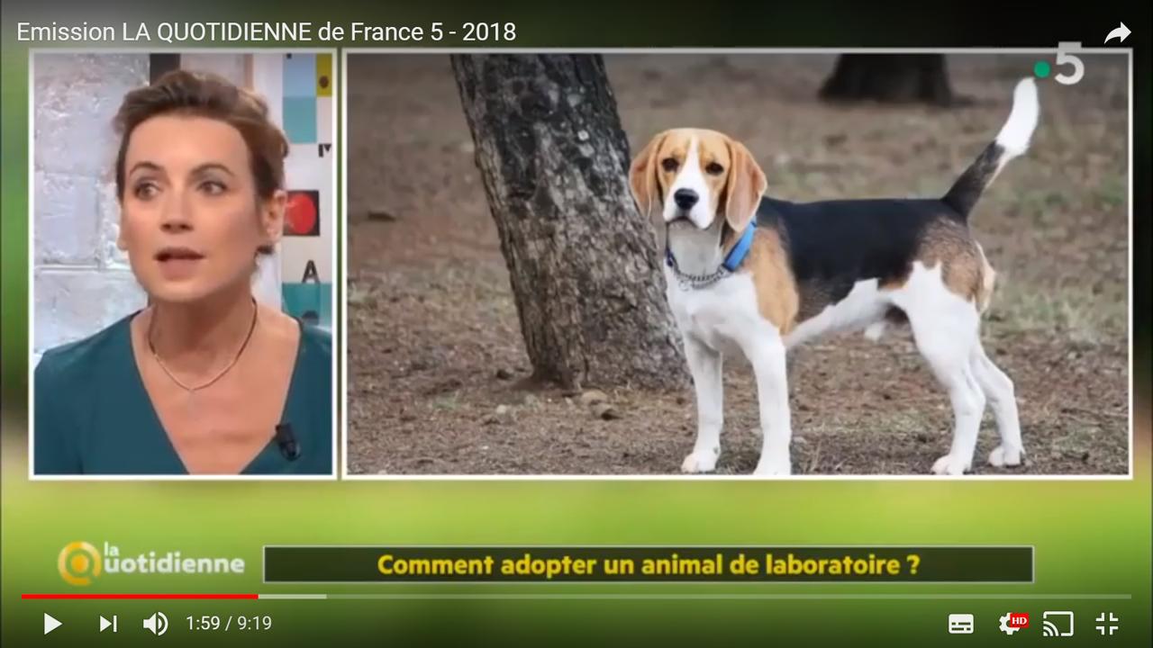 Emission La Quotidienne France 5 - Animaux de Laboratoire